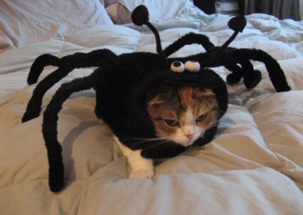 кот в костюме паука