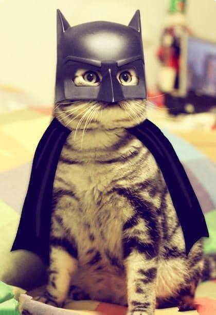 кот в костюме бэтмена