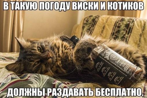 кот с бутылкой виски