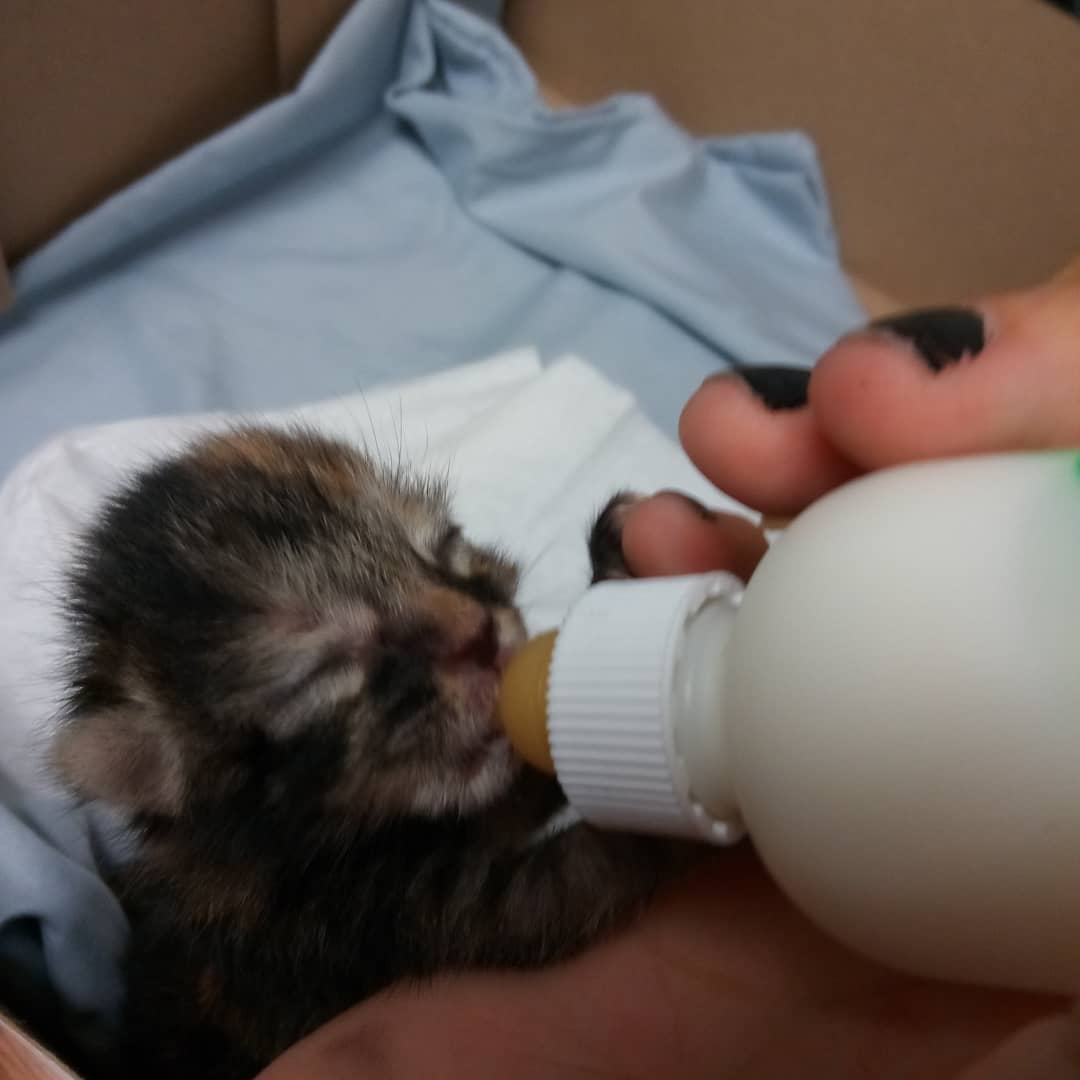 фото котят, котята, котят кормят молоком