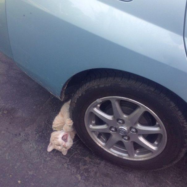 рыжий кот под колесом машины