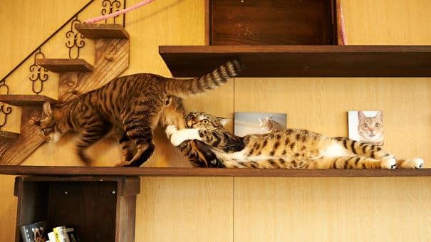полосатые коты на полке