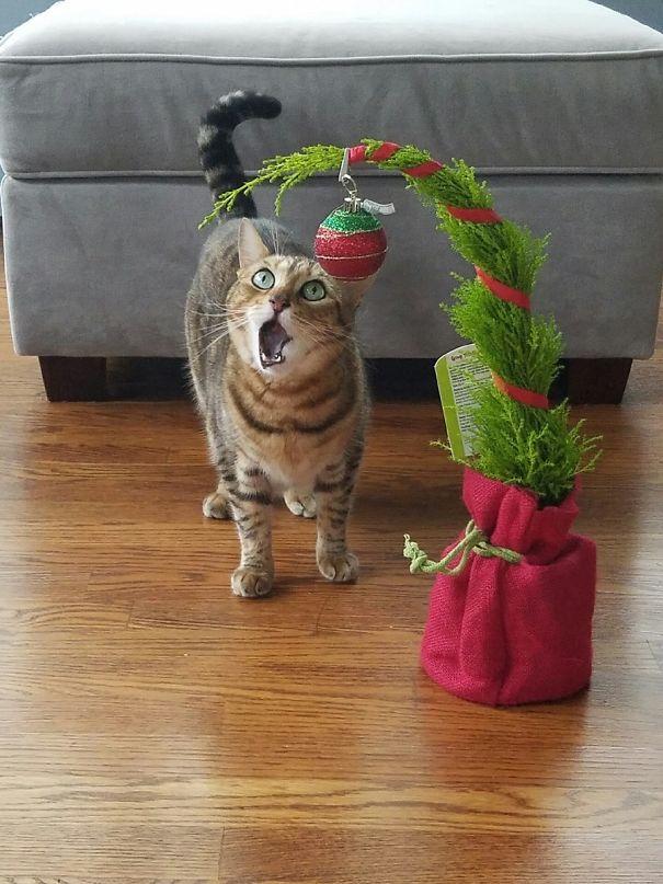 кот рядом с еловой веткой