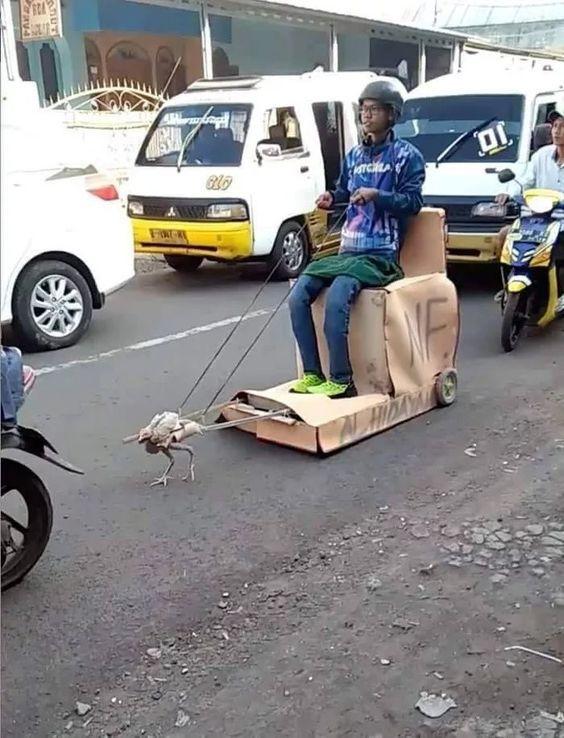 парень на самодельной телеге с курицей