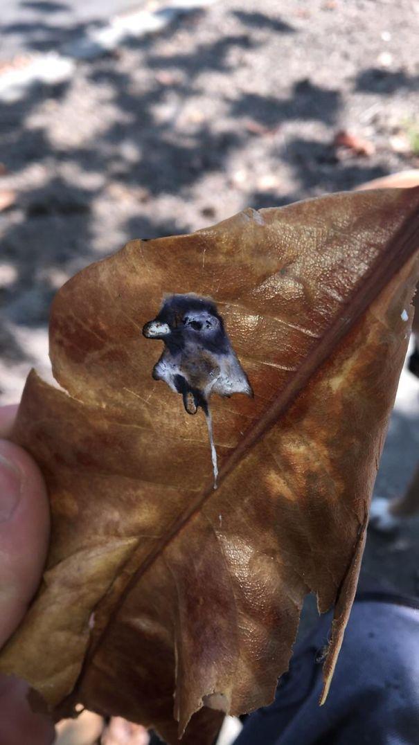 рисунок голубя на листике