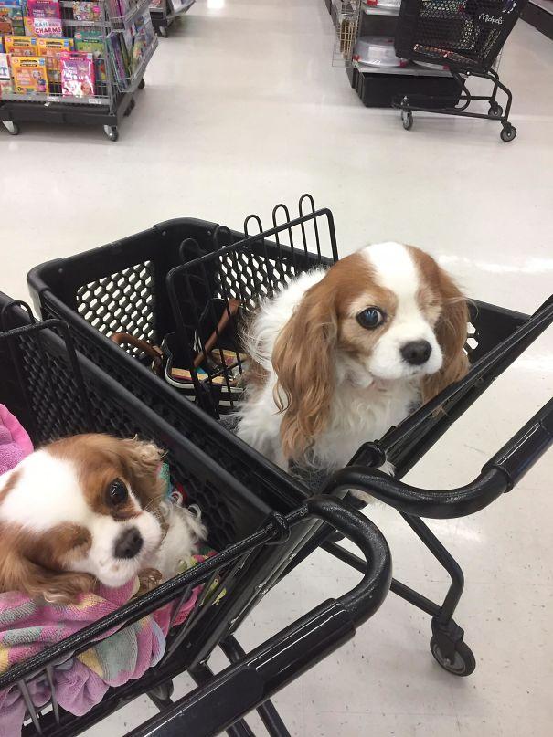 две одноглазые собаки