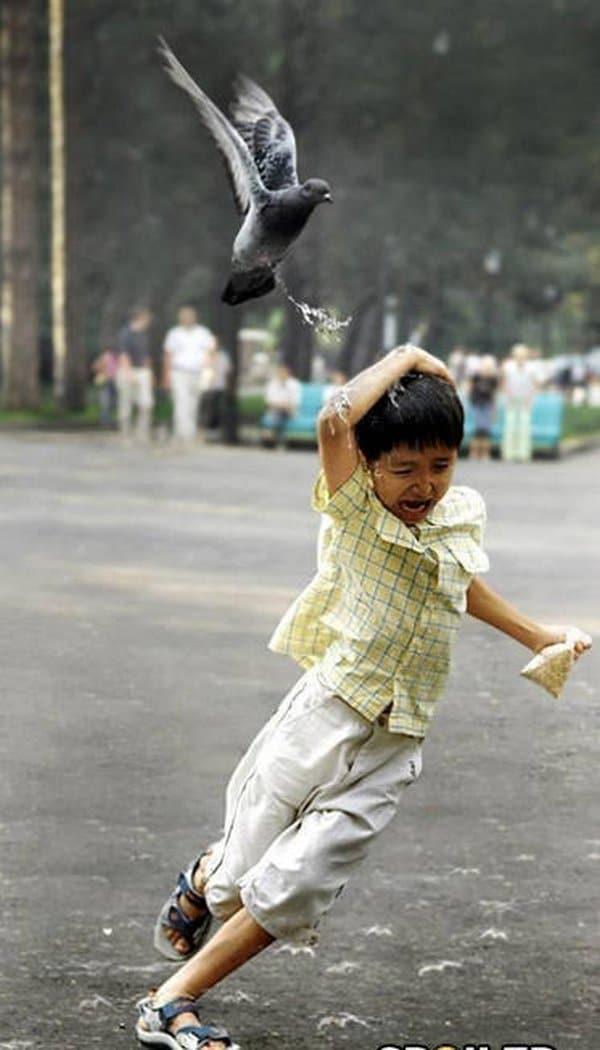 голубь летит над мальчиком