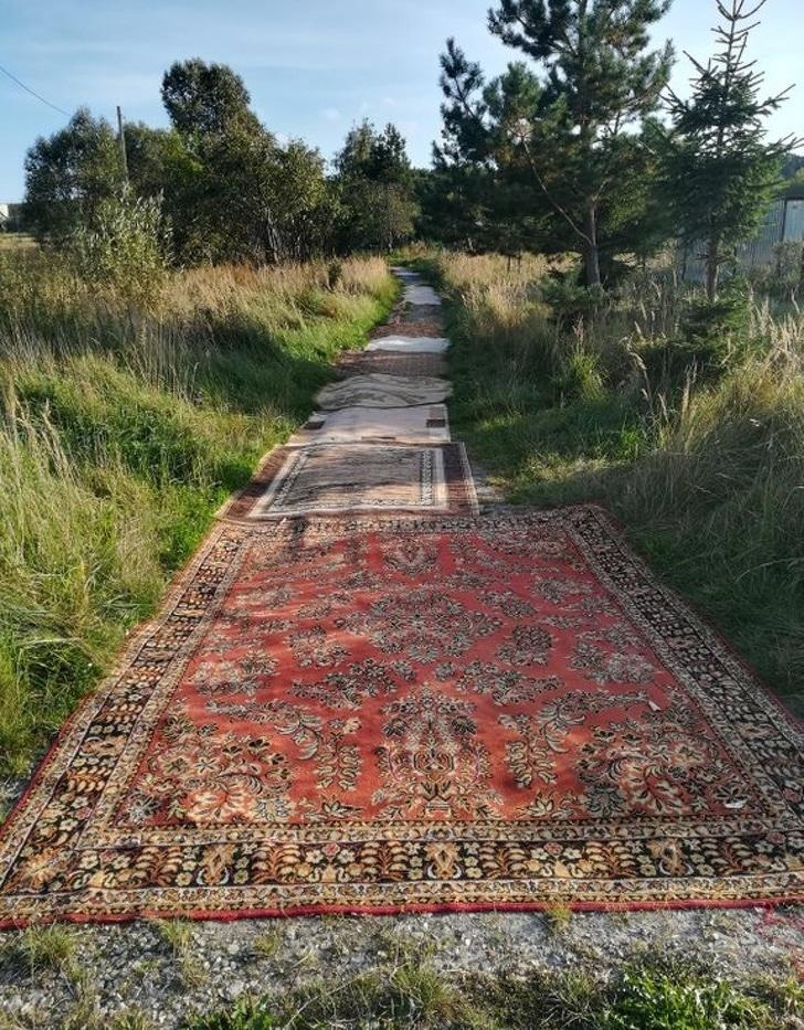 ковры на земле