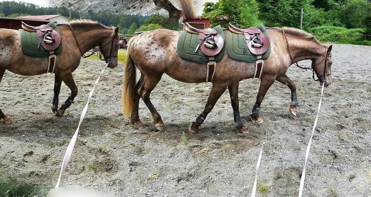 длинная лошадь