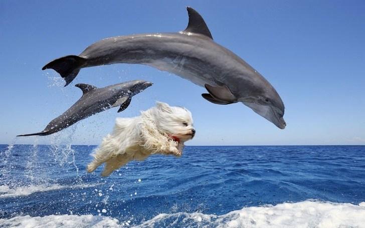 дельфины и собака