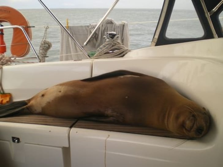 тюлень на палубе