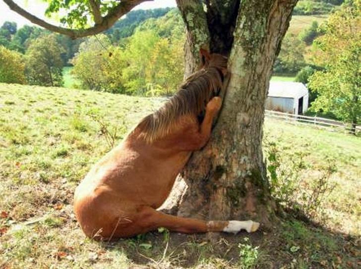 лошадь спит