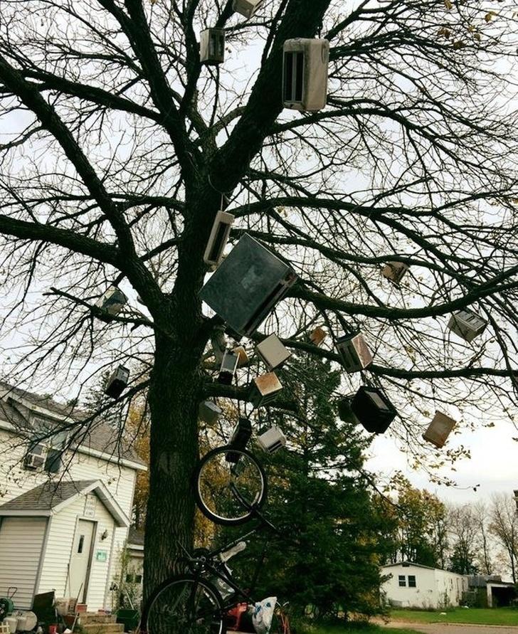 тостеры на дереве