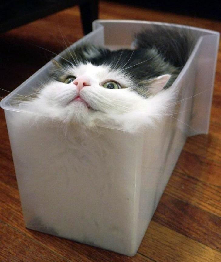 кот в контейнере