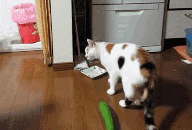 кошка испугалась огурца