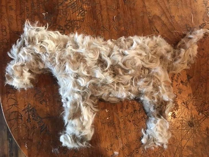 куча волос