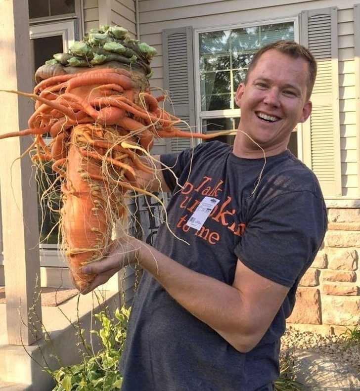 большая морковка