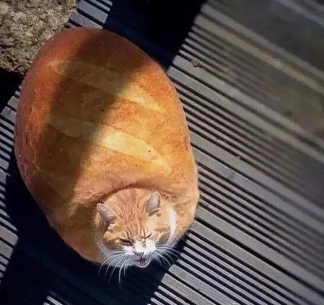 рыжий кот фотошоп