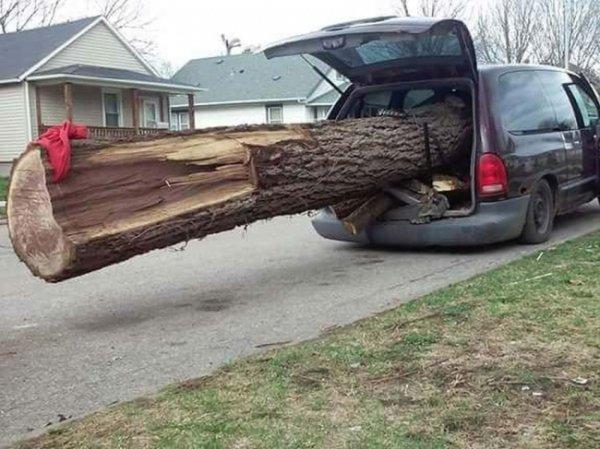 ствол дерева в машине