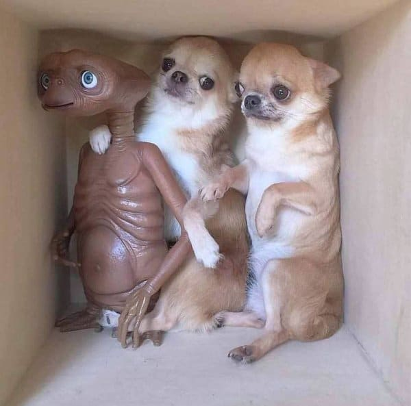 собаки и игрушечный инопланетянин