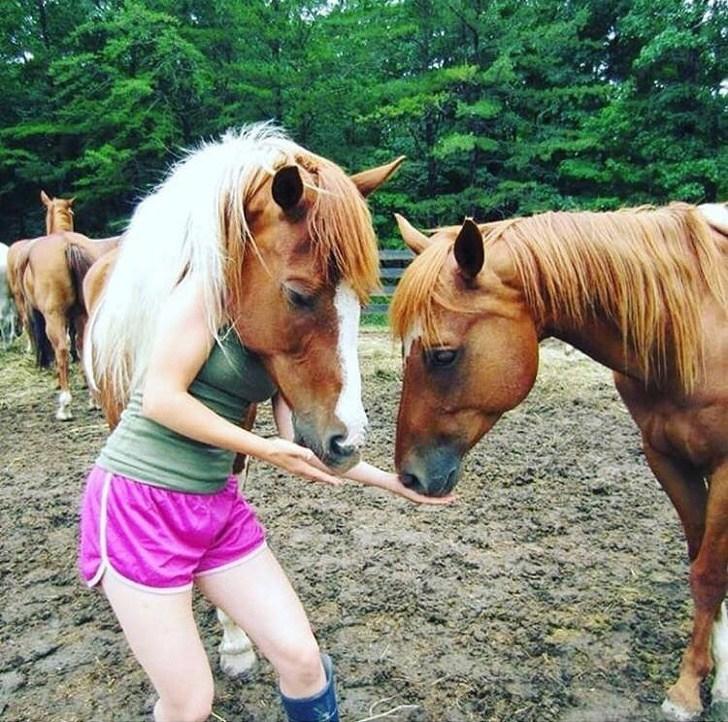 девушка кормит лошадей