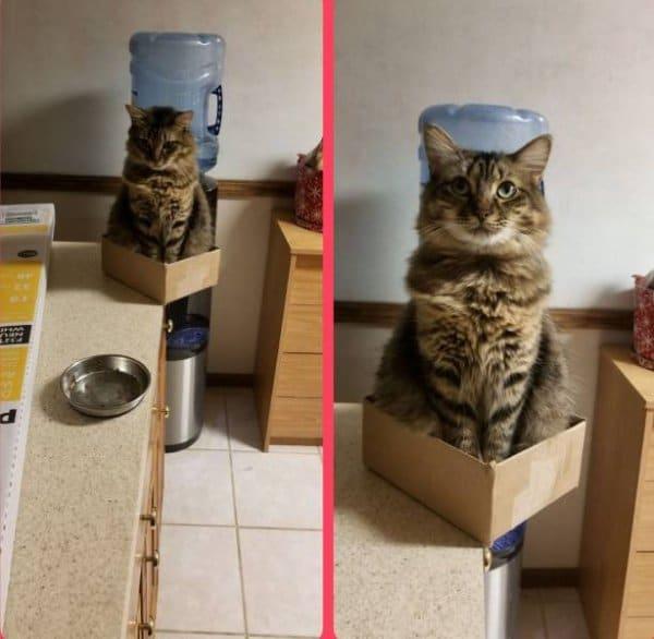 кот сидит в коробке на краю стола