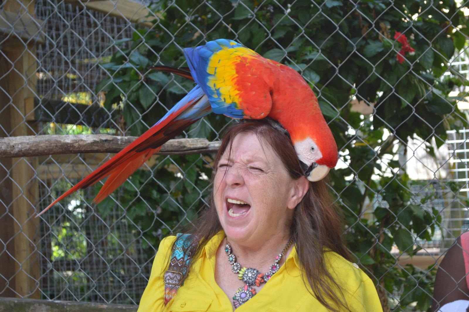 попугай на голове у женщины
