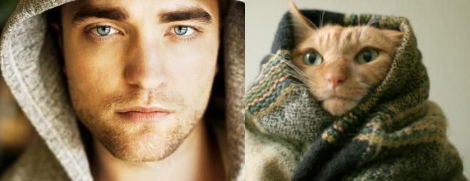 роберт паттинсон и рыжий кот