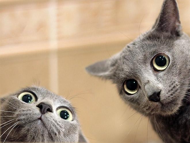 селфи двух котов