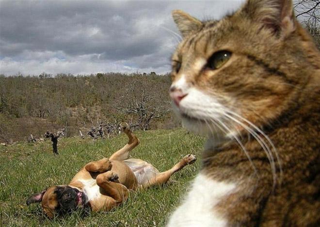 фото кота и собаки
