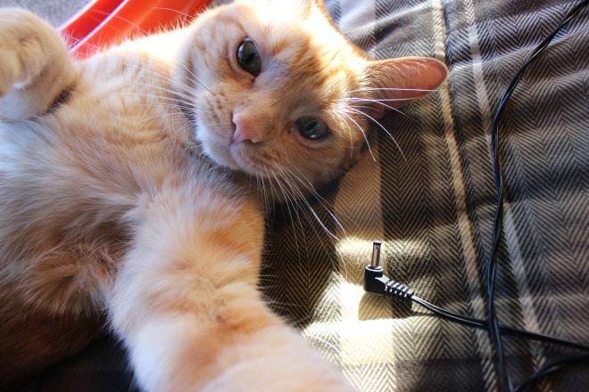 рыжий кот селфи