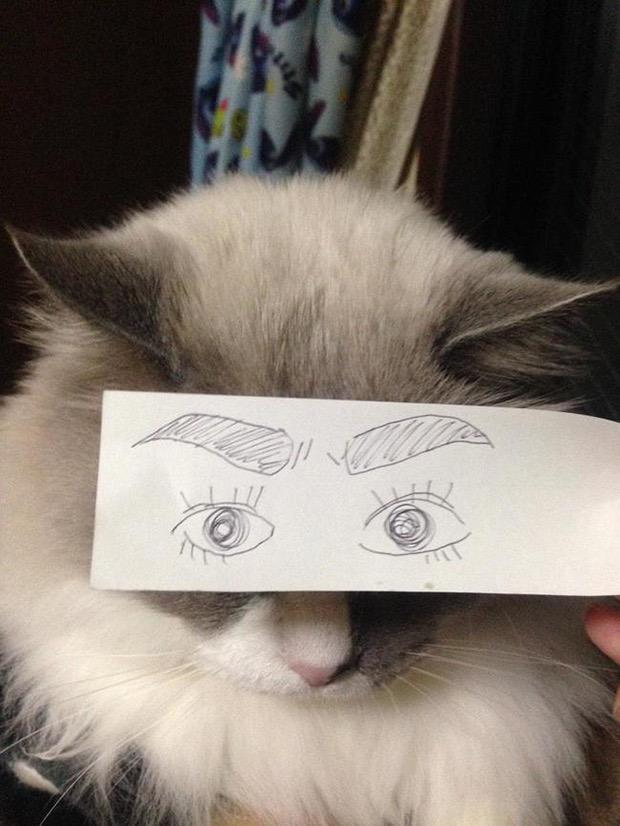 кошка с нарисованными глазами и бровями