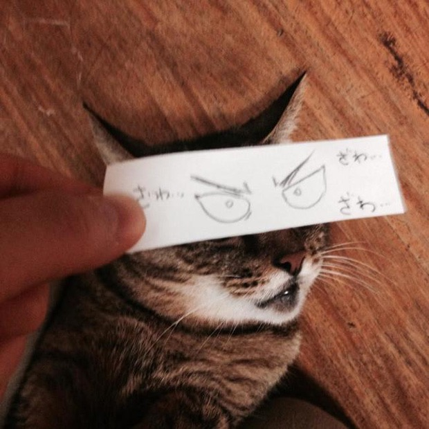 кот с нарисованными глазами