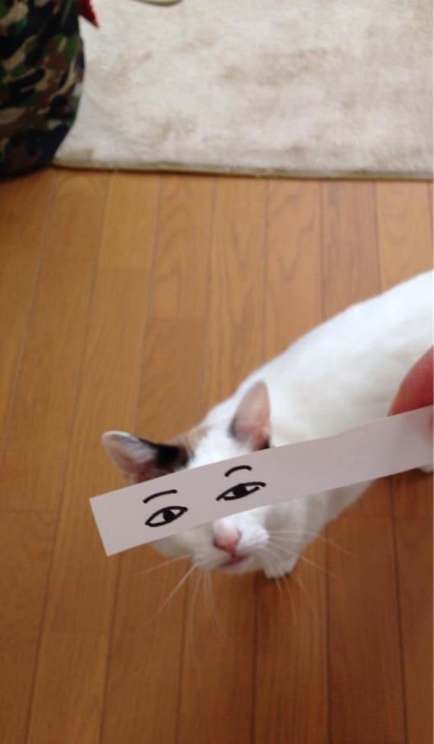 белый кот с нарисованными глазами