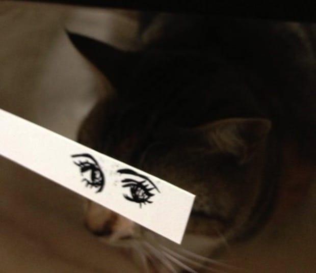 кошка с нарисованными глазами