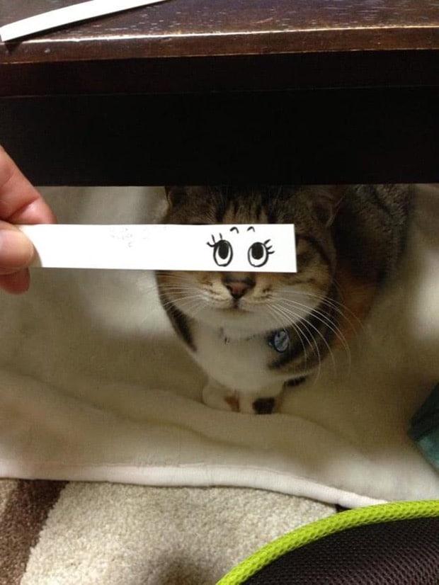 полосатый кот с нарисованными глазами