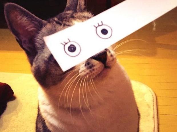 кот с глазами, нарисованными на бумаге
