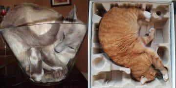коты жидкость