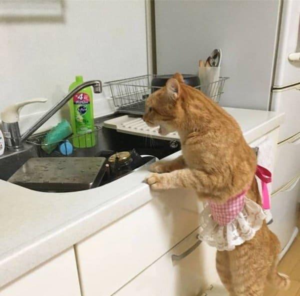 рыжий кот стоит возле раковины