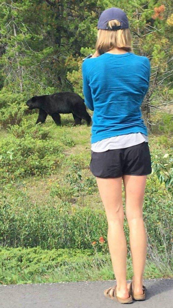 девушка фотографирует медведя