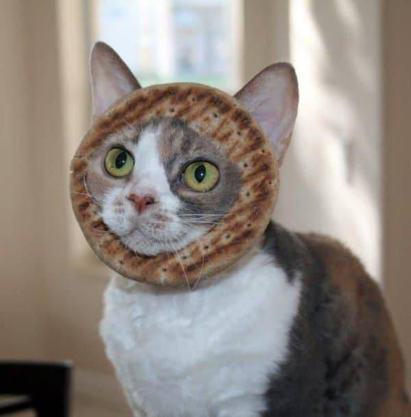 кот с бубликом на голове