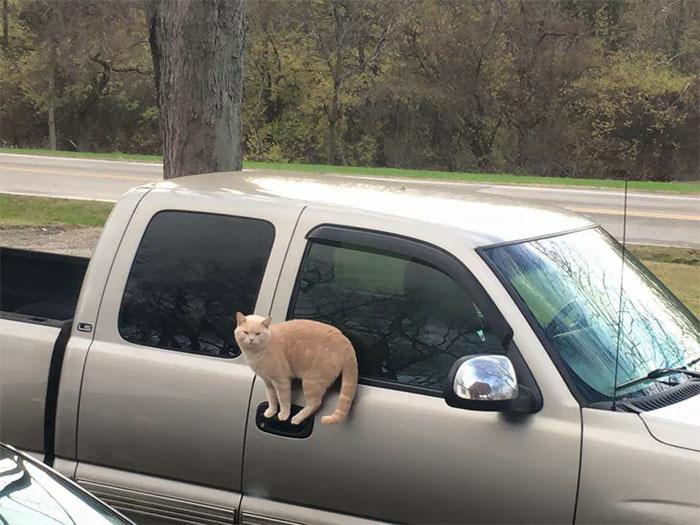 кот на ручке машины