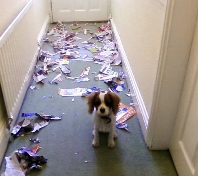 собака в коридоре с разорванными журналами