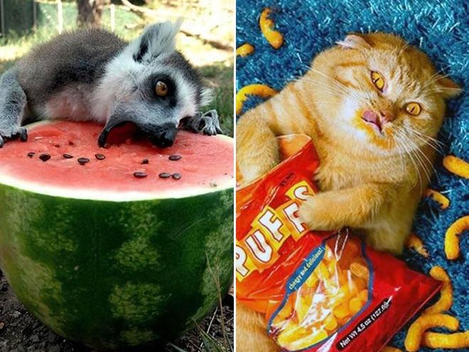 животные едят