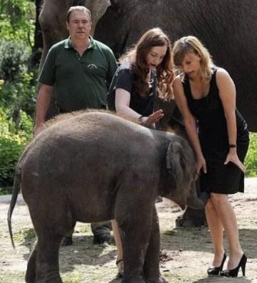 люди и слон