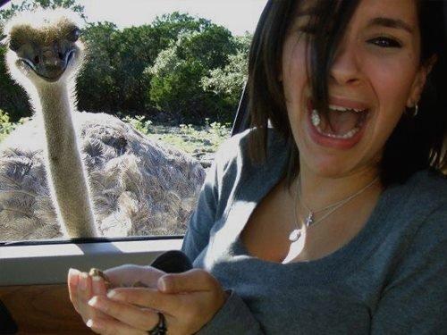девушка и страус