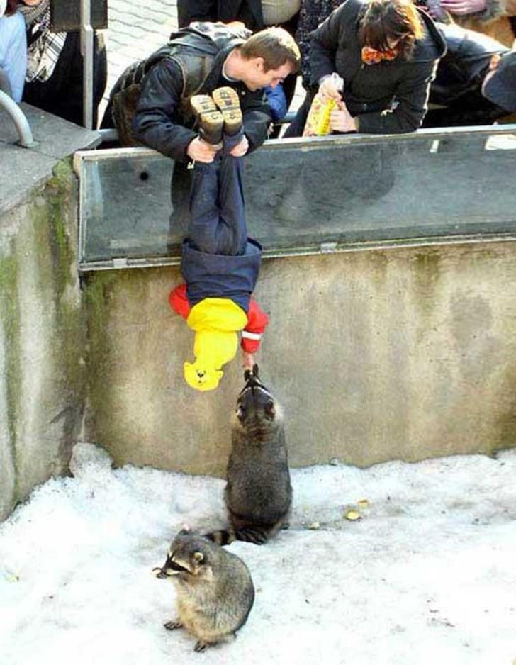 мальчик кормит енота в зоопарке