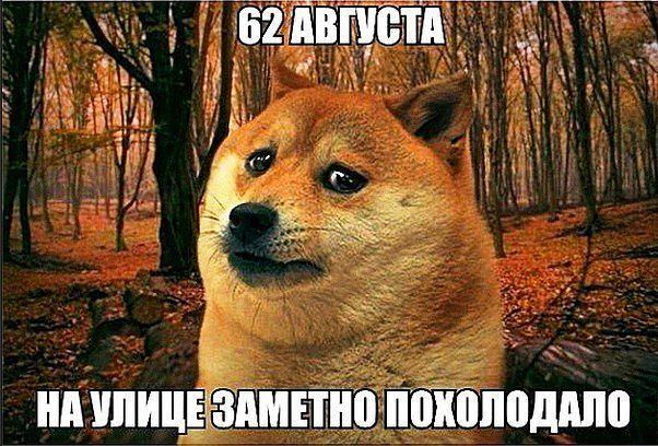 собака породы шиба ину