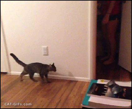 девушка пугает кота