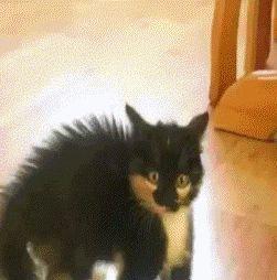 испуганный черный кот
